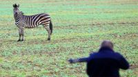Zebra shot dead after escaping circus in Germany